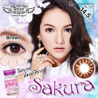 Sakura Brown Dreamcolor1เลนส์นิ่มใส่สบาย คอนแทคเลนส์ ขายส่งคอนแทคเลนส์ ขายส่งBigeye บิ๊กอายเกาหลี