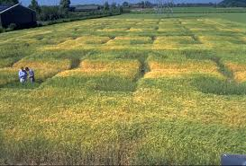 โรคราในพืข บีเอสบอมบ์ ยากำจัดเชื้อรา โรคพืช ไตรโคเดอร์มา เกษตรอินทรีย์ เกษตรปลอดสาร