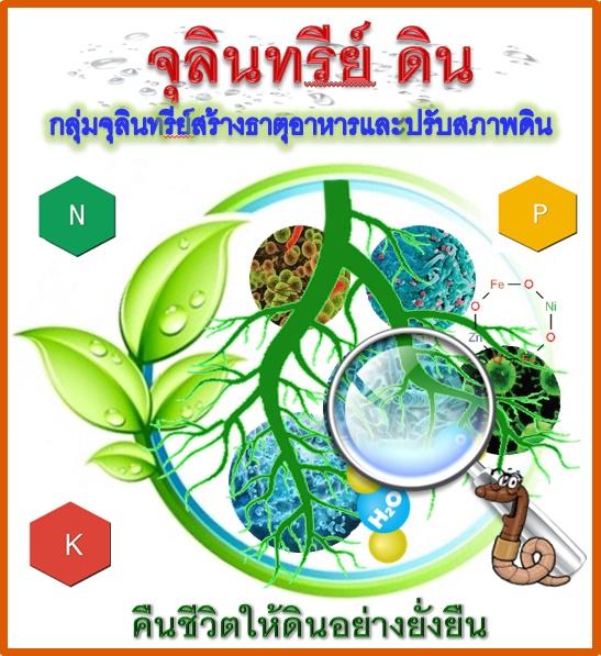 ปุ๋ยอินทรีย์,ปุ๋ยหมัก,จุลินทรีย์ในดิน,จุลินทรีย์มีประโยชน์,จุลินทรีย์ดินป่า,ดินมีชีวิต,จุลินทรีย์ในธรรมชาติ,จุลินทรีย์หน่อกล้วย,เลี้ยงเชื้อ,ขยายเชื้อ,แมลงศัตรูพืช,เมธาไรเซียม,พาซิโลมัยซิส,บาซิลลัสซับทีลิส,การกำจัดหนอน,เชื้อราไตรโคเดอร์มา,ไตรโคเดอร์มา,กำจัดโรคพืช,โรคพืช,4สหาย,ป้องกันกำจัดแมลงศัตรูพืช,หนอนกินใบ,สปริงเกอร์,ท่อpe,แมลง ศัตรู พืช และ การ ป้องกัน กํา จัด