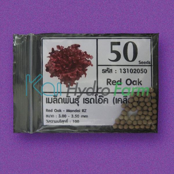 เมล็ดพันธุ์ Red Oak (เคลือบ) 50 เมล็ด