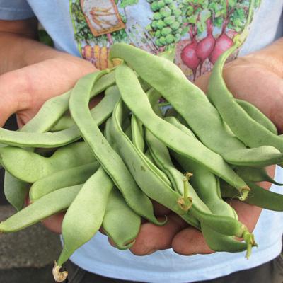 Jumbo Bean (ถั่วลันเตาจัมโบ้)