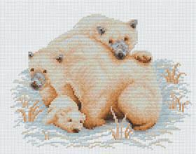 หมีโพลาร์