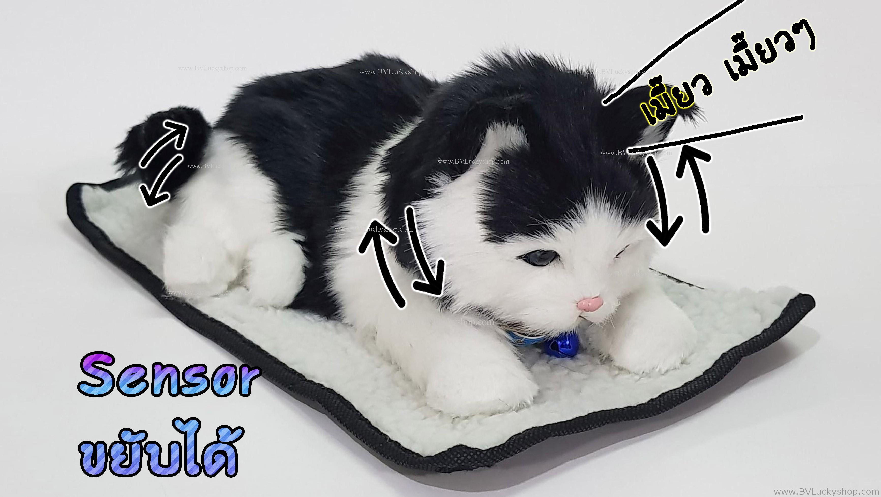 ตุ๊กตาแมว เซ็นเซอร์จับมือผ่าน แล้วส่วนหัวและหางจะเคลื่อนไหว และมีเสียงร้องเมี้ยวด้วย [Cat-SS5]