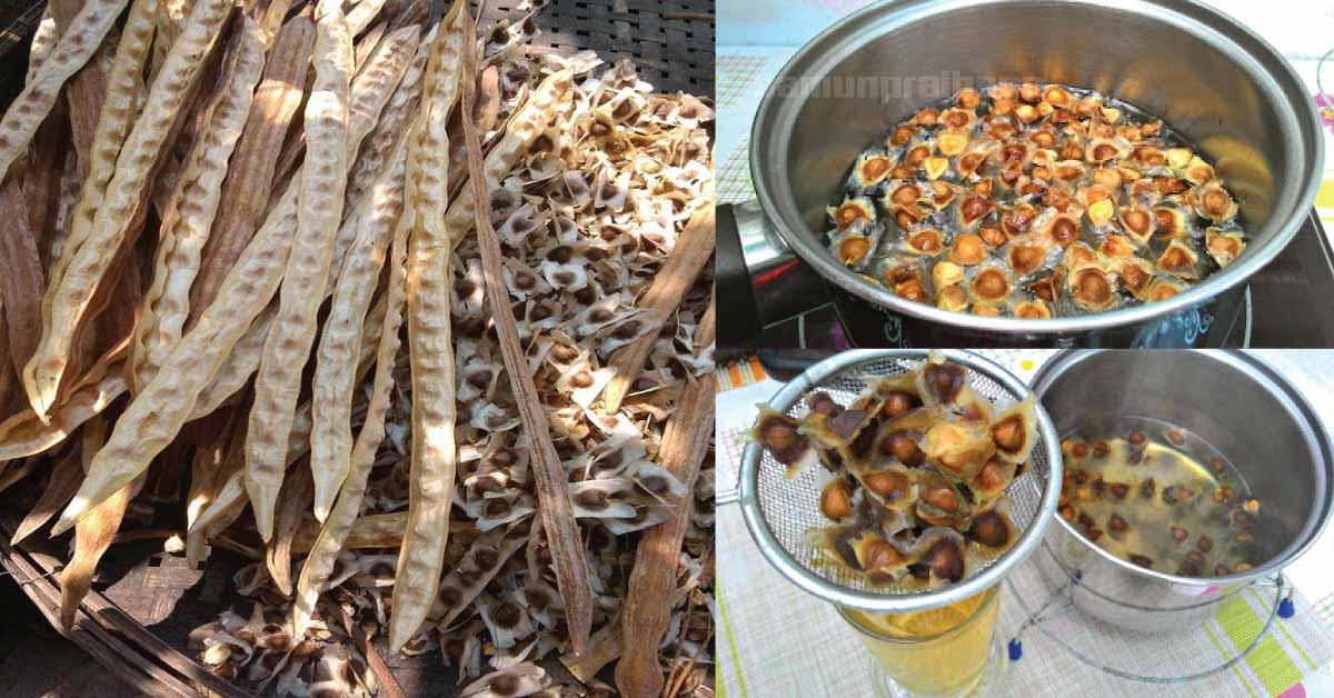 In Pack : Dried Moringa Seeds Thai herbs Tea herbs Organic 100%