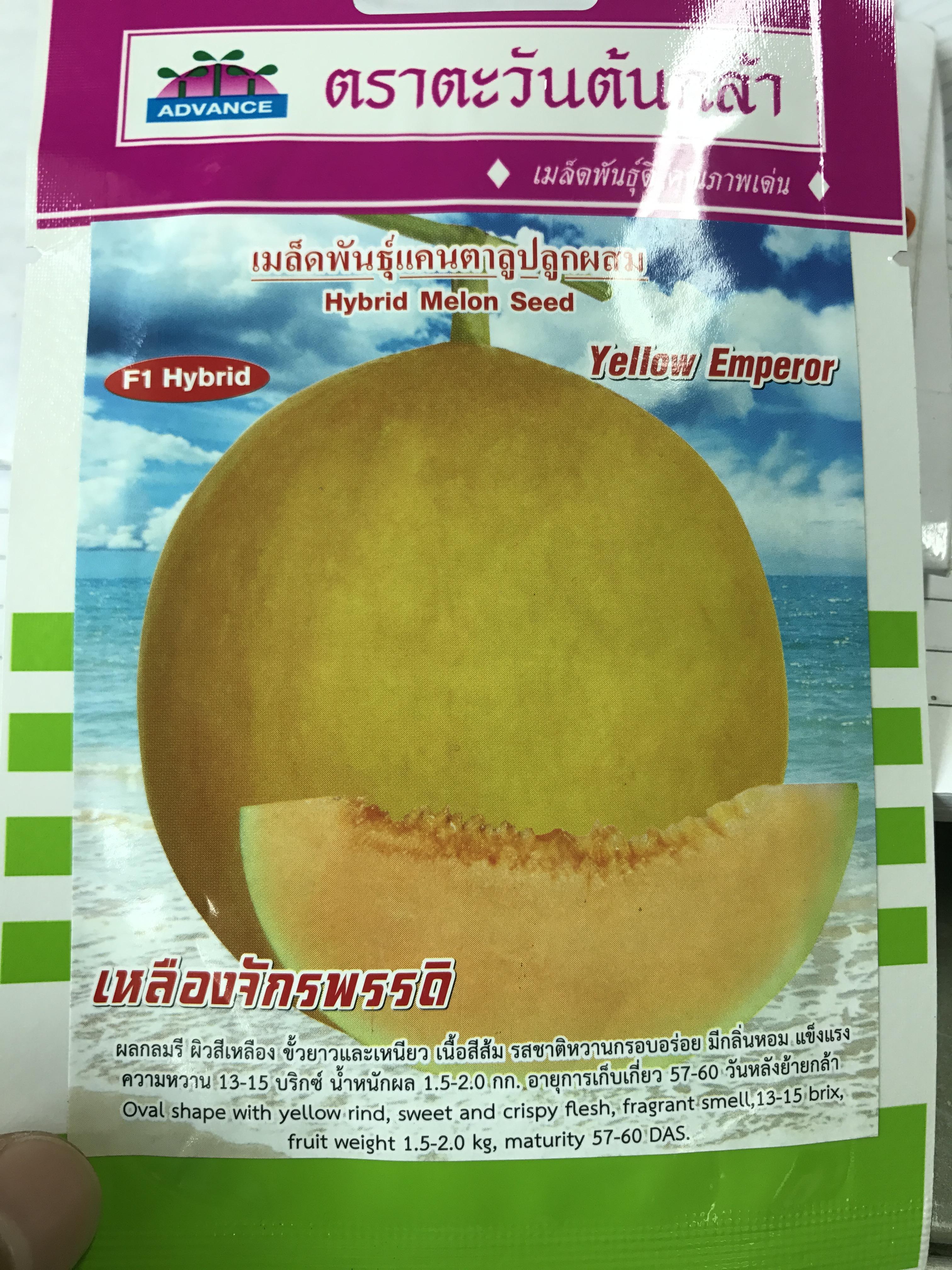 แคนตาลูป เหลืองจักรพรรดิ 10-12เมล็ด