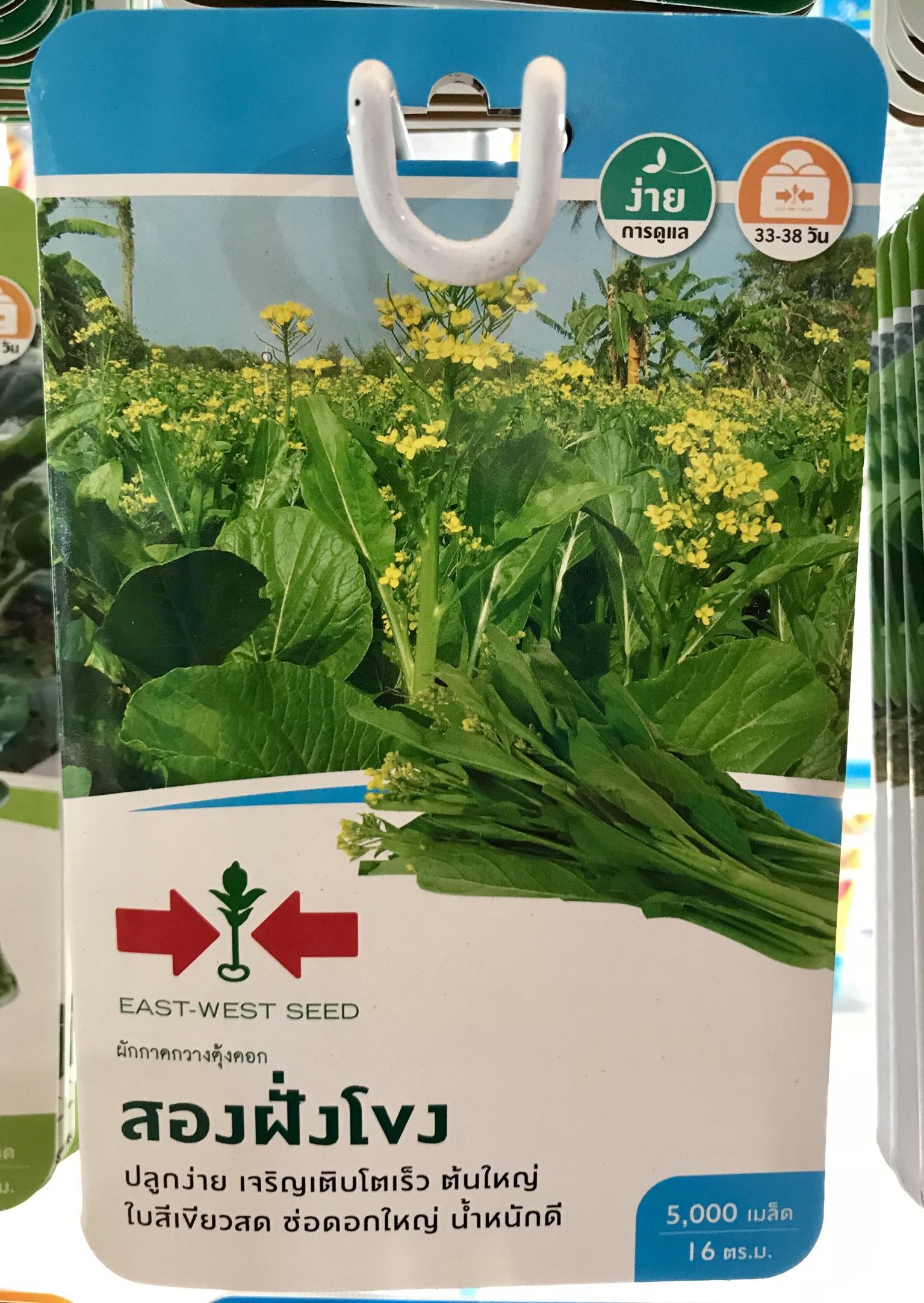 กวางตุ้งดอก สองฝั่งโขง 5000เมล็ด
